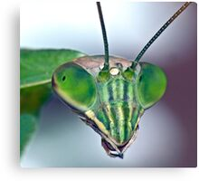 Mantis (7) Canvas Print