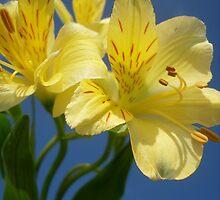 Las Flores Amarillas by insight