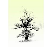 Story Book Tree Photographic Print