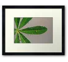 Lupin at dawn Framed Print