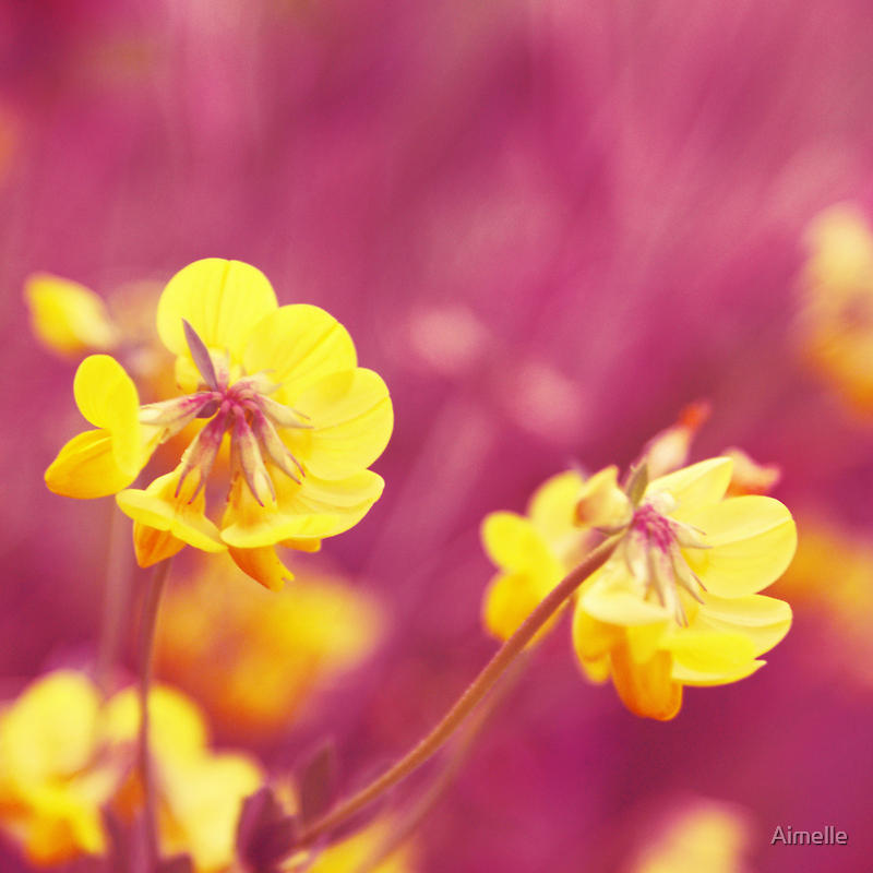 joyfulness by Aimelle