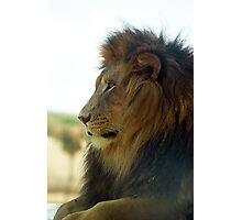 Lion Profile Photographic Print