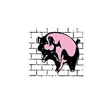 Flying Pig Photographic Print