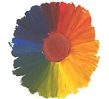 Colour Wheel Flower Photographic Print