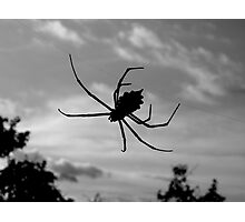 Kruger Spider Photographic Print