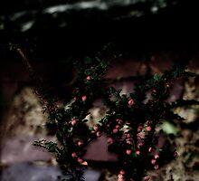 Berries On Brick - For BW Challenge 'B' by Barbara Gerstner