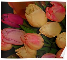 Tulips For Stephanie Aka Shulie1 Poster
