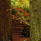 Trunks and Steps... A way through the woods. by Billlee