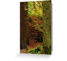 Trunks and Steps... A way through the woods. Greeting Card