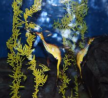 Sea Dragons by Sherri Freeman