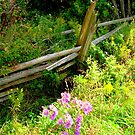 A Dressed Fence..... by Larry Llewellyn