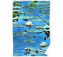 Lillypads in blue Poster