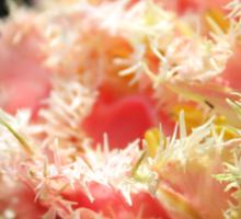 Pink Parrot Tulip Sticker