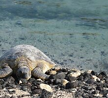 Sea Turtle by RenieRutten