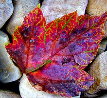 Autumn by DesignsByDeb