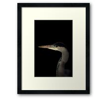 Grey Heron portrait  Framed Print