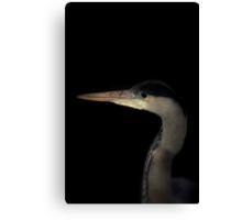 Grey Heron portrait  Canvas Print