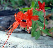 Red Forest Flower by Kimberly Miller