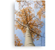 Looking up!!!!  Canvas Print