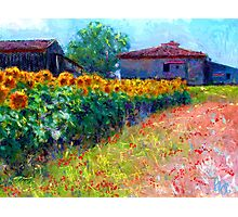 sunflower field/ after the style of Monet Photographic Print