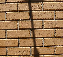 Cable Shadow by Joan Wild