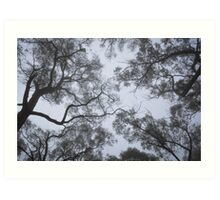 Misty Forest Canopy Art Print