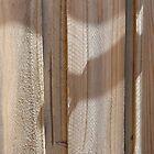 Gate Shadow by Joan Wild