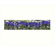 Iris Sing Along Art Print
