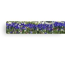 Iris Sing Along Canvas Print