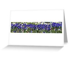 Iris Sing Along Greeting Card