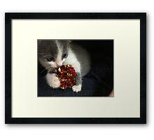 Curiosity Didn't Kill The Cat  Framed Print