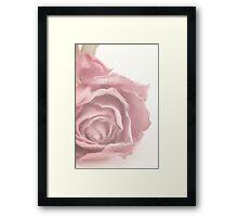 Soft Pink Dried Rose Framed Print