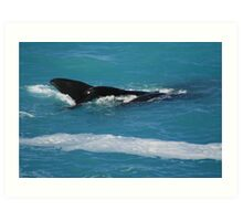 Having a whale of a time at the Bight. Art Print