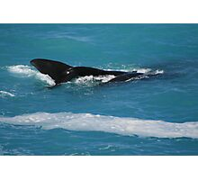 Having a whale of a time at the Bight. Photographic Print