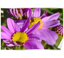 Dune Spring Daisies Poster