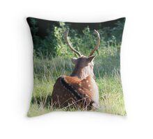 Young Buck sunbathing Throw Pillow