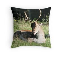 Laugh, I almost........ Throw Pillow