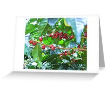 El Salvador #4 - Ripe coffee fruit beans Greeting Card