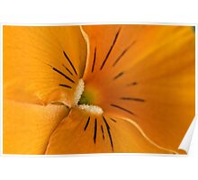 A different angle on a sunny orange pansy Poster
