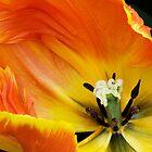 Fabulous Flowers edition 1 by Alison Cornford-Matheson