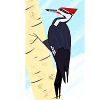 Pileated Woodpecker in Winter Photographic Print