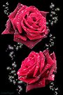 Red Rose by LoneAngel