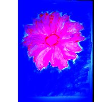 Pink Flower on Blue Photographic Print