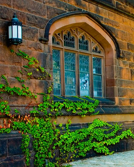 Ivy League by Mary Campbell
