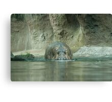 Nile Hippo on the Pangani Forest Exploration Trail Canvas Print