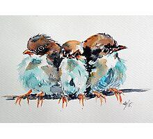 Three birds Photographic Print