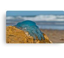 Blue Jellyfish 02 Canvas Print