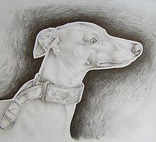 whippet by craig smith