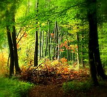 Fabulous forest by i l d i    l a z a r