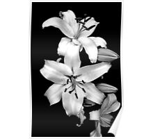 "White Lily""s Poster"